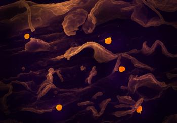 Medicamentos usados contra ebola e malária passam em teste e controlam infecção do novo coronavírus