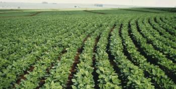 Deral aumenta estimativa para produção e rendimento de soja no PR