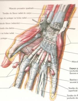 Cuidados com Punho e Mão