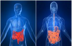 Alimentação e nutrição nas doenças inflamatórias intestinais