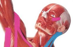 Bandagem Funcional – aspectos teóricos